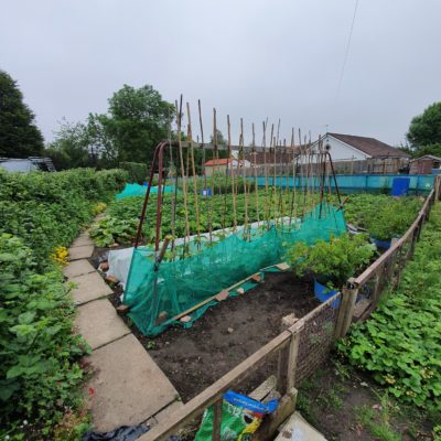 Allotment Pic2