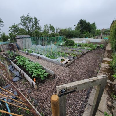 Allotment Pic3