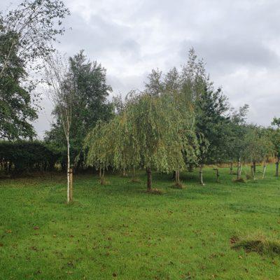 Prestwick Cemetery Woodland Area